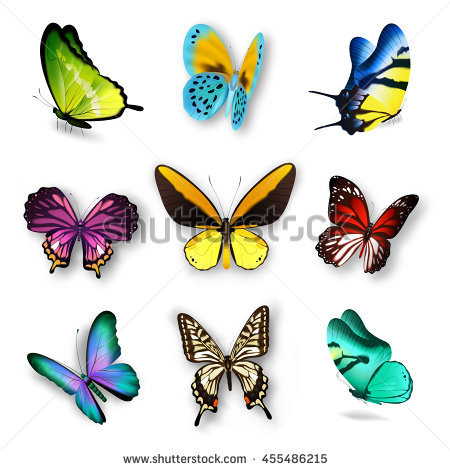 Realistic Butterfly Stock Images, Royalty.