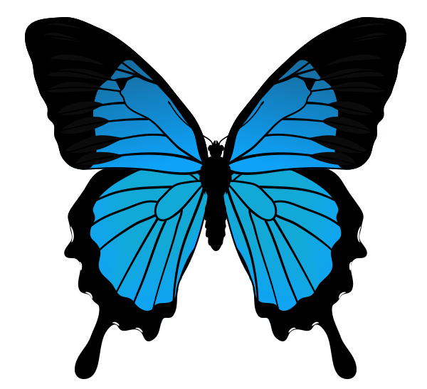 How to Draw Animals: Butterflies, Their Anatomy and Wing Patterns.