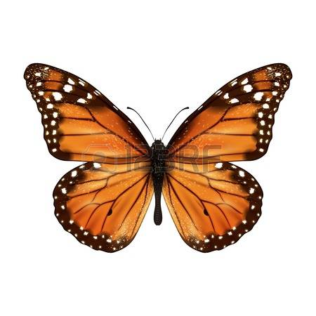 3,719 Monarch Butterfly Stock Vector Illustration And Royalty Free.