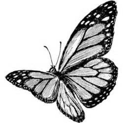 Similiar Realistic Black And White Butterflies Keywords.
