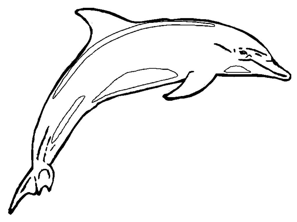 Similiar Dolphin Line Drawing Keywords.
