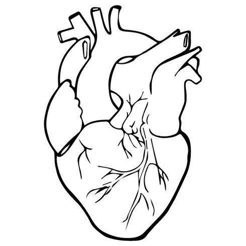 Realistic Heart Outline.