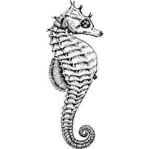 Seahorse clip art.