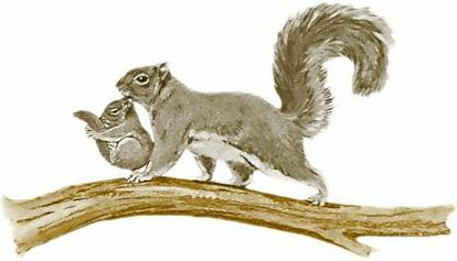 Free squirrel clipart clip art pictures graphics illustrations 3.