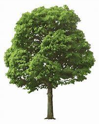 Realistic Tree Clip Art.