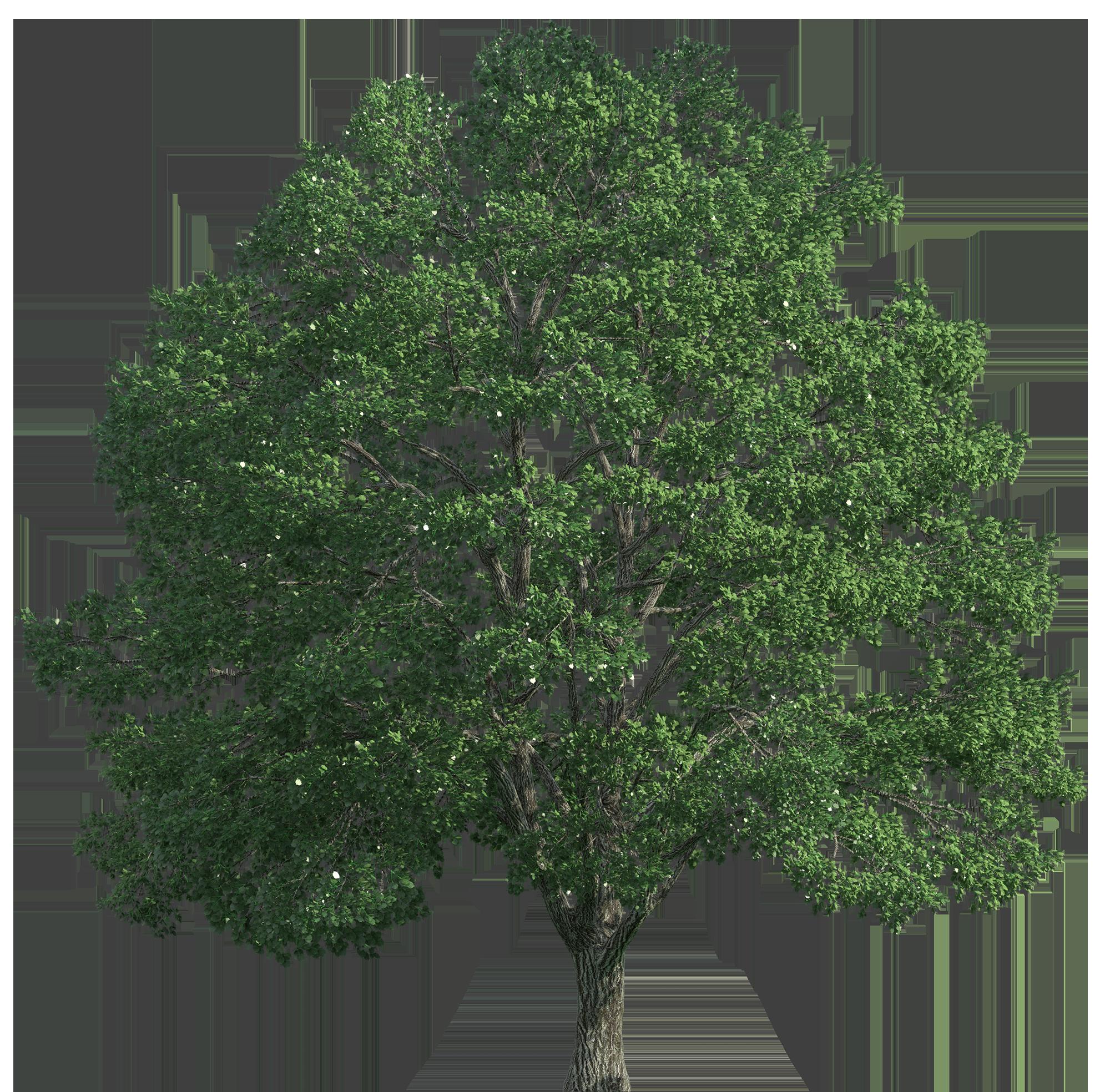 Tree Realistic PNG Clip Art.