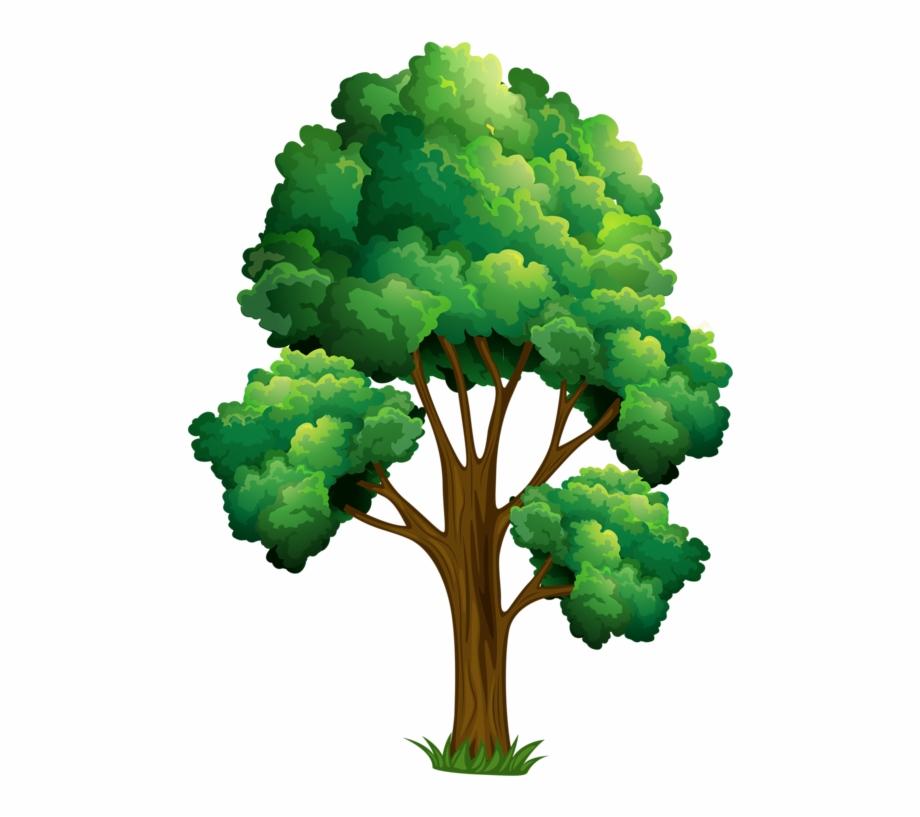 Elm Tree Clipart.