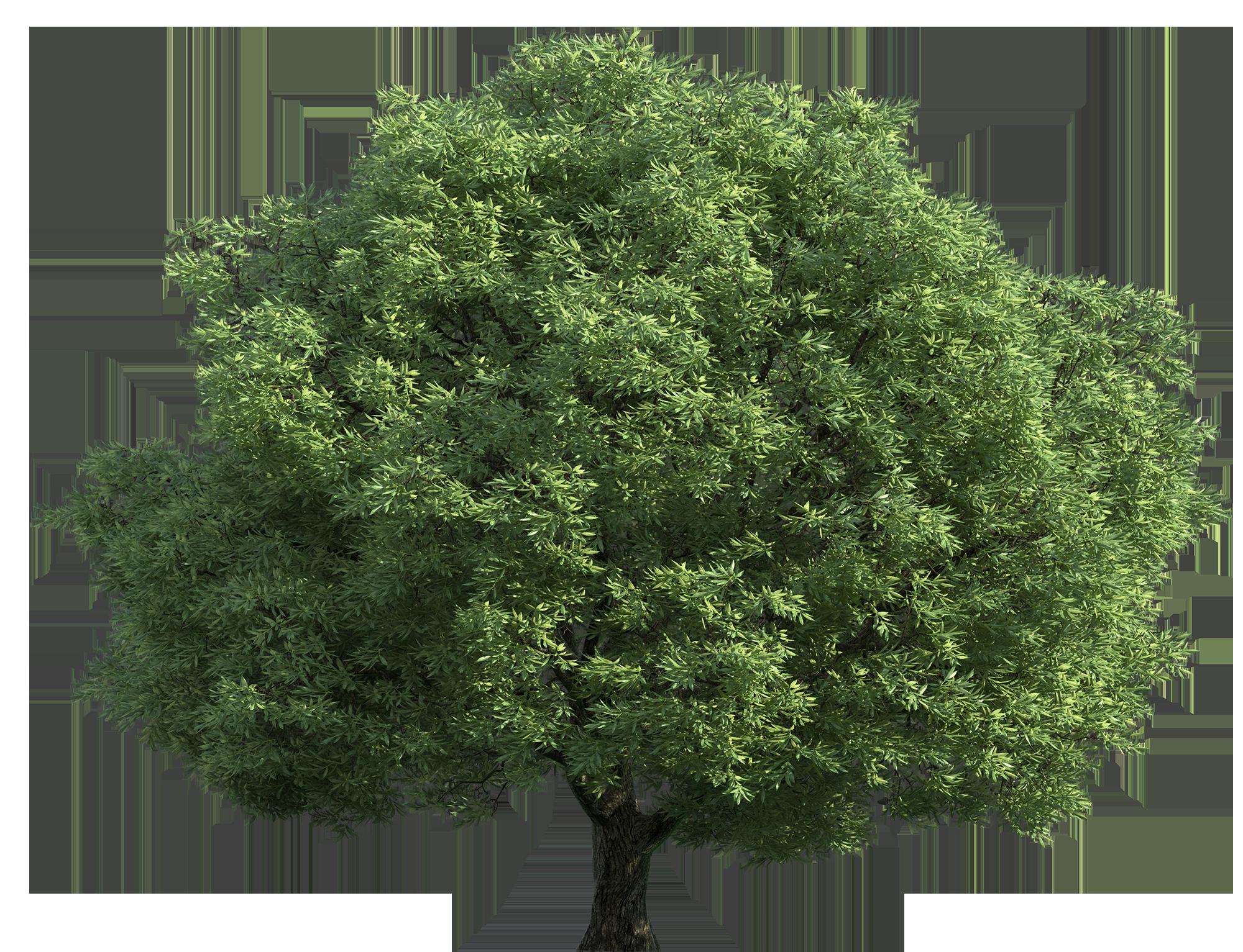 Realistic Green Tree PNG Clip Art.