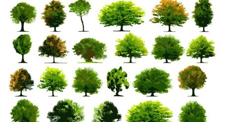 Collection of realistic trees Clipart Picture Free Download.