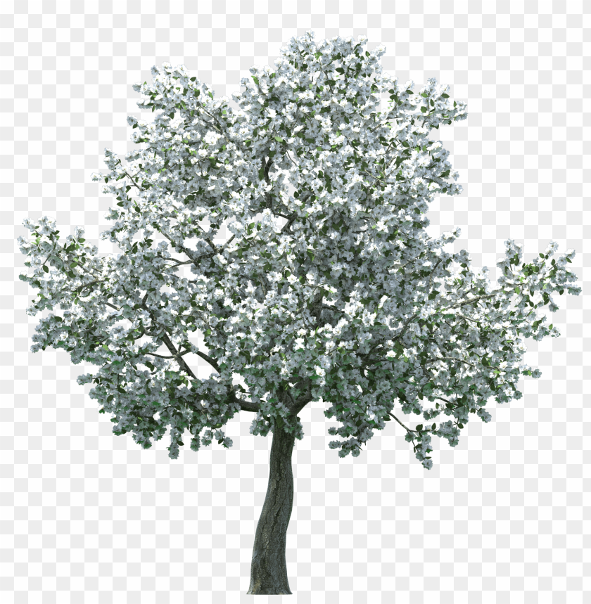 Download realistic blossom tree clipart png photo.