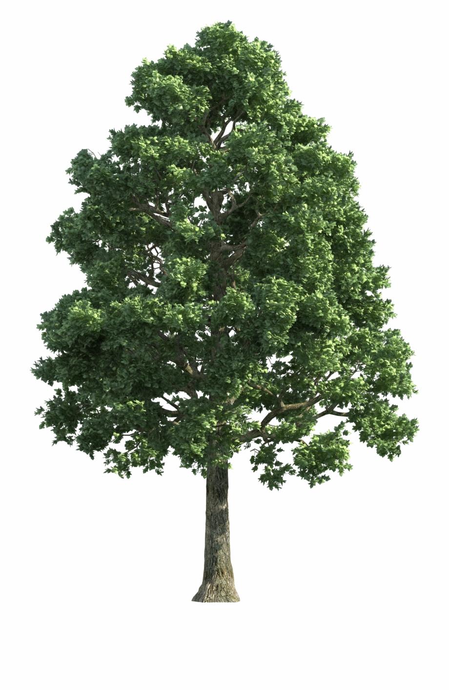 Green Realistic Tree Png Clip Art.