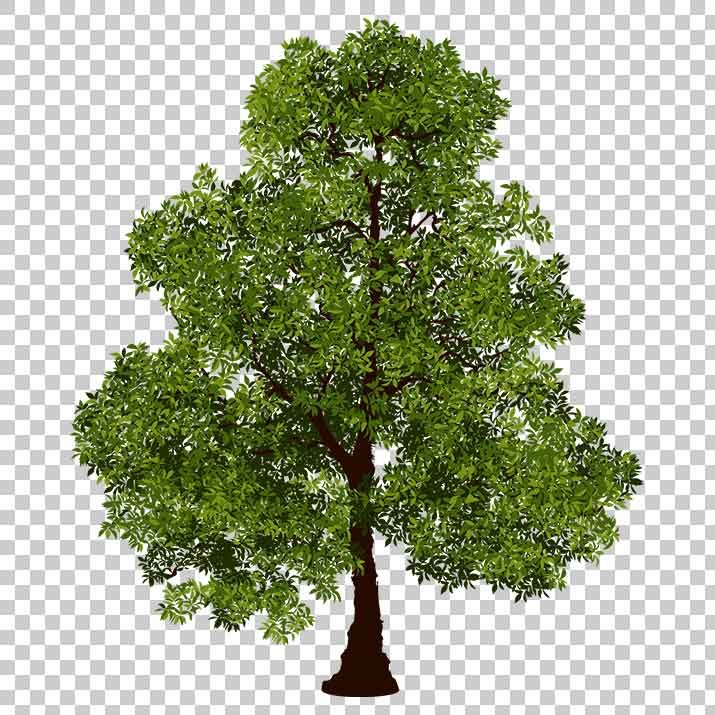 Realistic Tree PNG Clip Art Free Download searchpng.com.