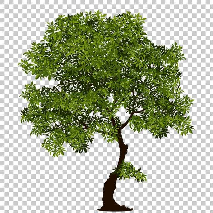 Realistic Tree PNG Image Free Download searchpng.com.