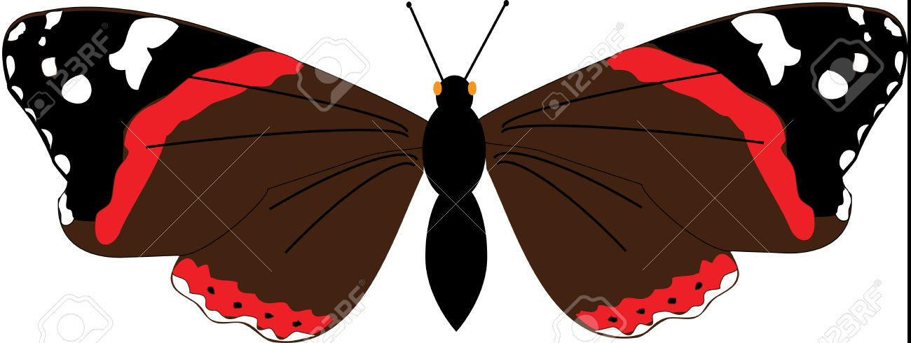 Illustration Of A Red Admiral Butterfly.