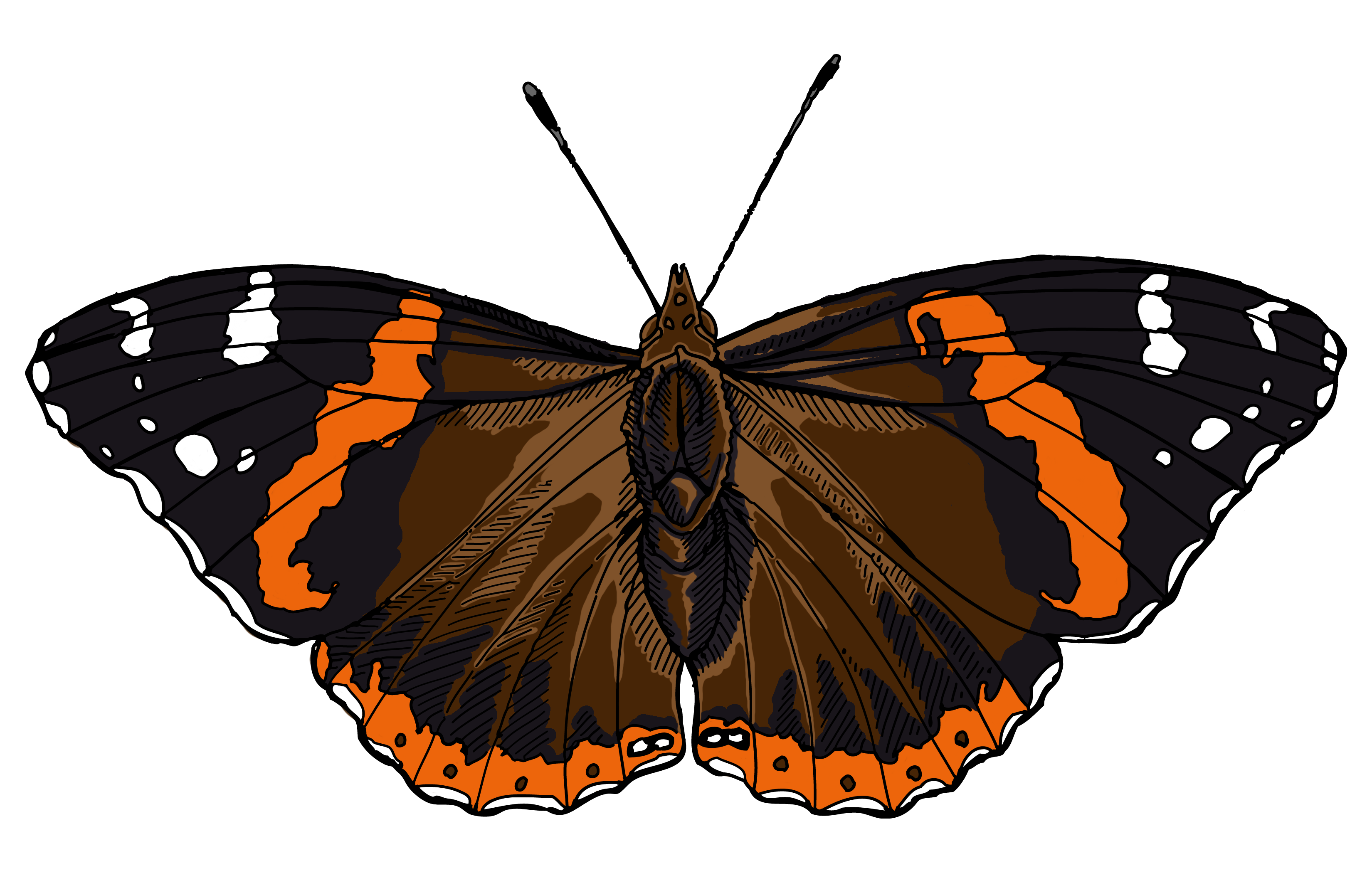 Red Admiral Clipart Etc.