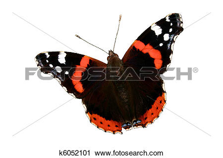 Clipart of Red Admiral (Vanessa atalanta) k6052101.