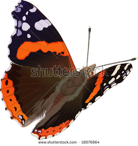 Red Admiral Butterfly Stock Images, Royalty.