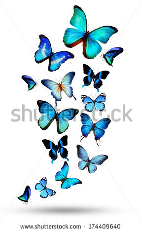 Black And White Butterfly Stock Photos, Royalty.