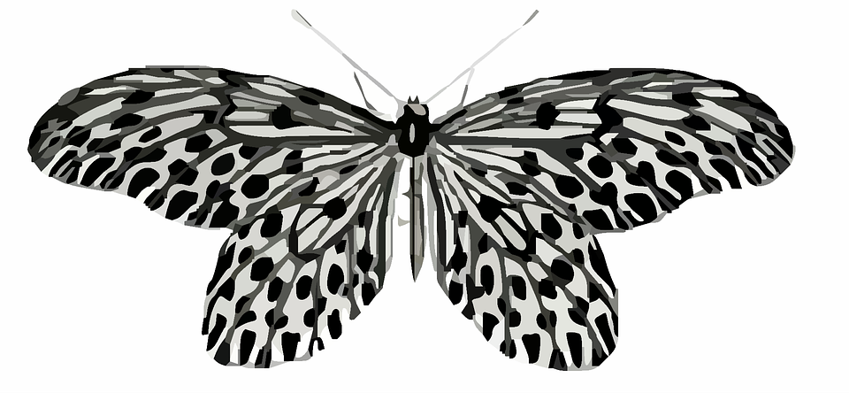 Free illustration: Butterfly, Clip Art, Colorful.