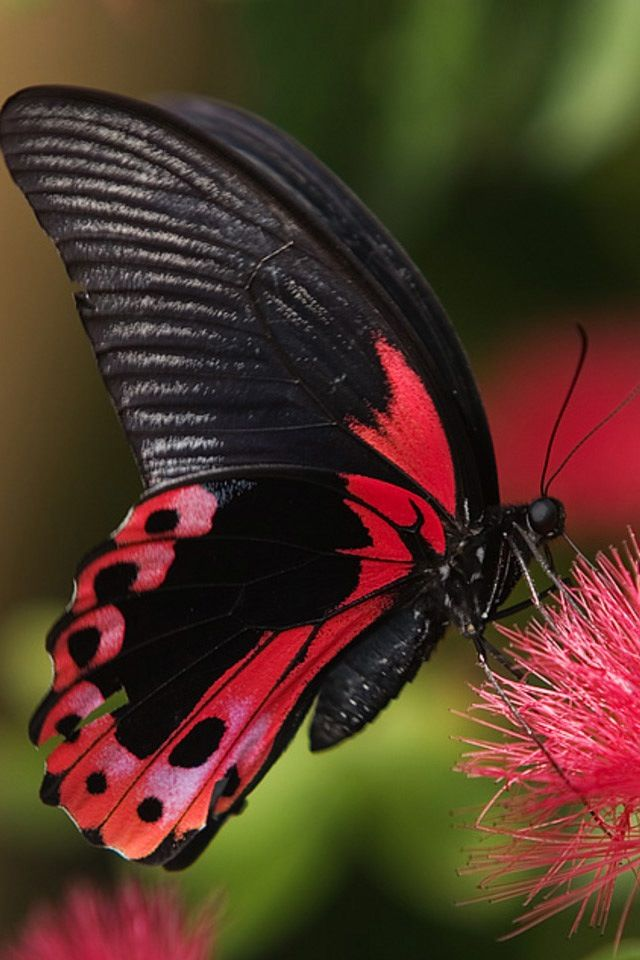 1000+ ideas about Pink Butterfly on Pinterest.