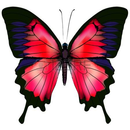 Red Butterfly Stock Photos & Pictures. Royalty Free Red Butterfly.