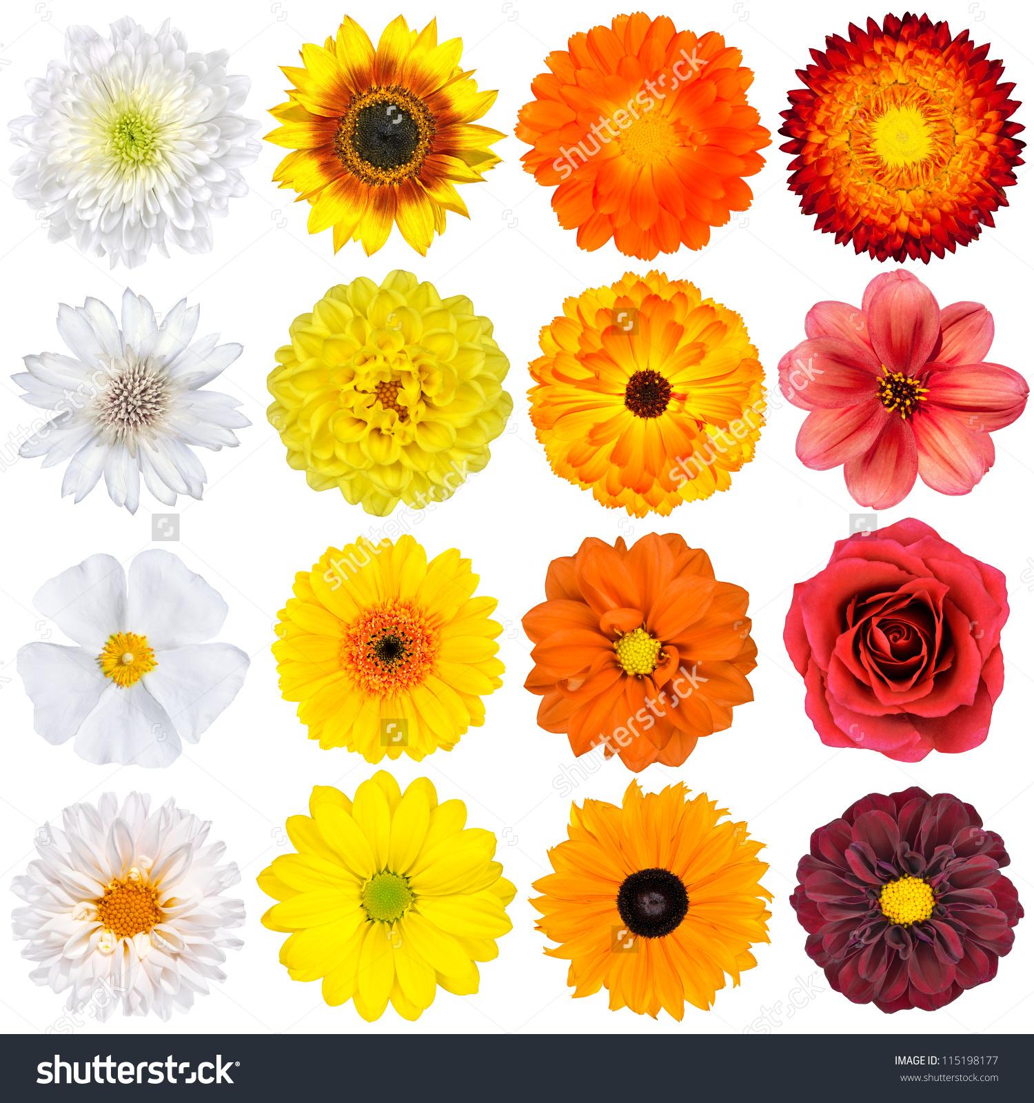Selection Various White Yellow Orange Flowers Stock Photo.