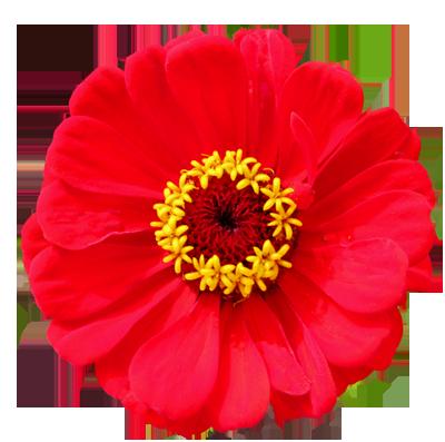 Wonderful flower clipart.