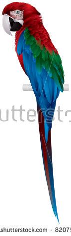 Ara Parrot Stock Vectors & Vector Clip Art.