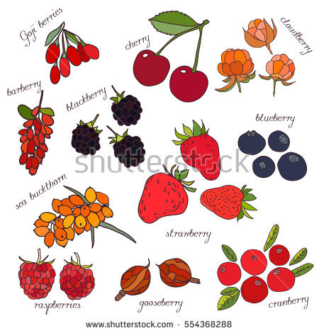 Barberry Stock Images, Royalty.