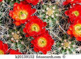Barrel cactus Stock Photo Images. 2,034 barrel cactus royalty free.