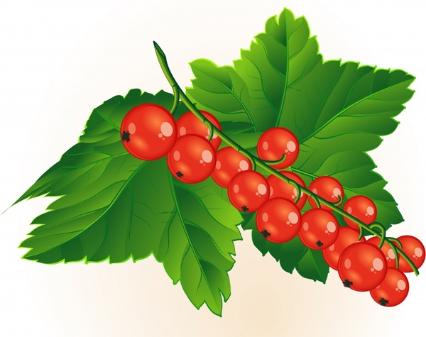 Red Currant Berry Bush