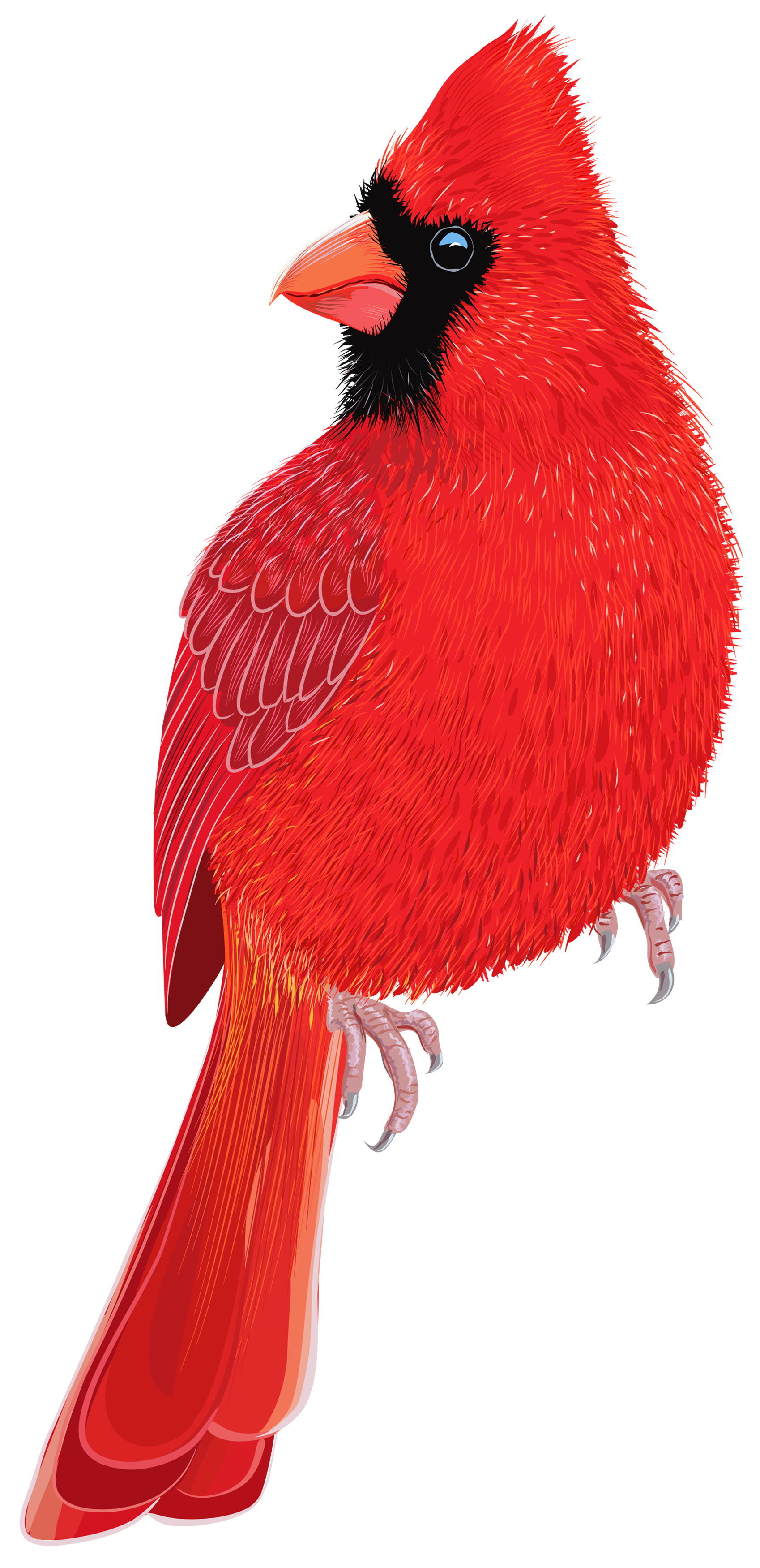 Red Bird PNG Clipart IMage.