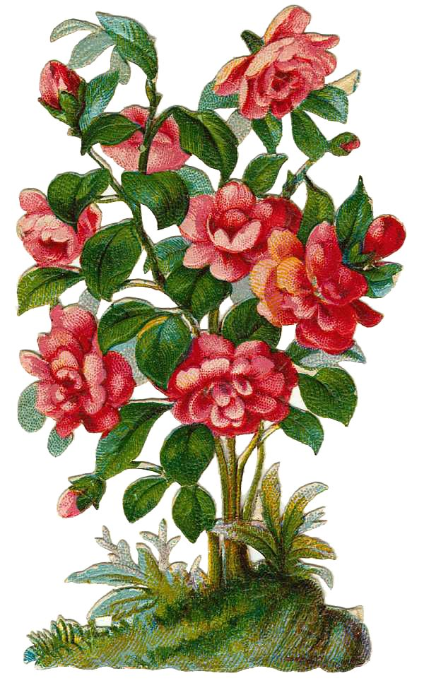 Rose Bush Clipart.