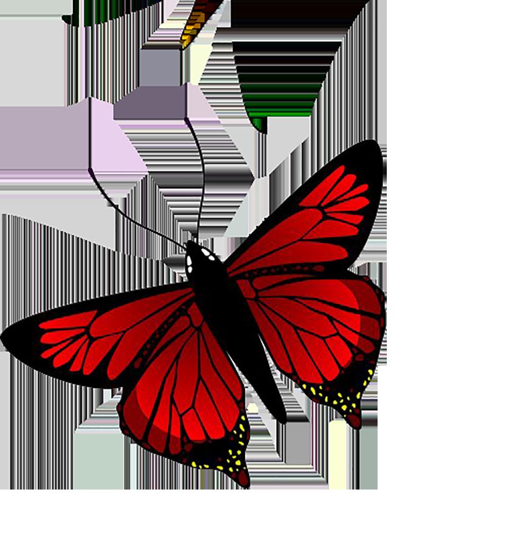 Butterfly Illustration.