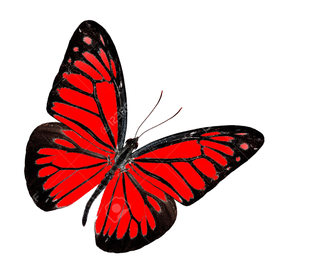 Butterfly PNG Transparent Images, Pictures, Photos.