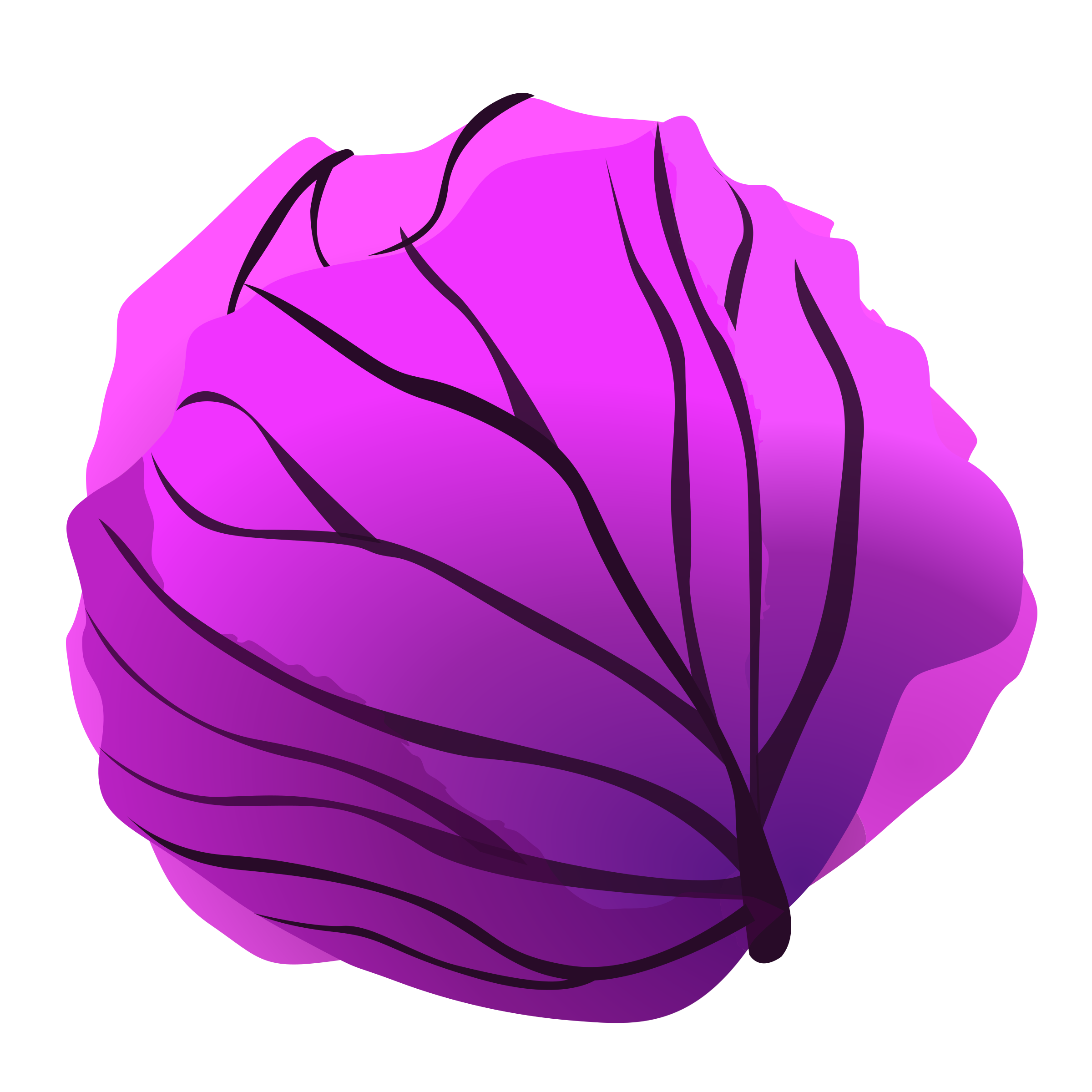 Red cabbage clipart.