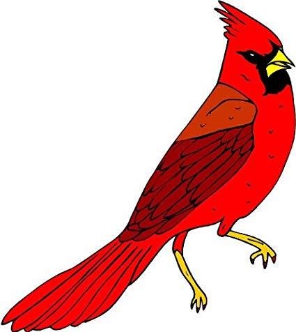 Vibrant Red Cardinal Bird.