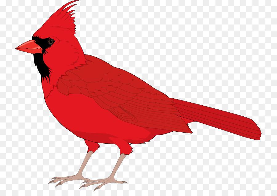 Cardinal Bird clipart.