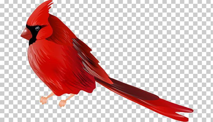 Northern Cardinal Bird PNG, Clipart, Animals, Art, Beak.