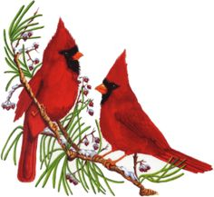 CHRISTMAS MALE AND FEMALE CARDINALS CLIP ART.