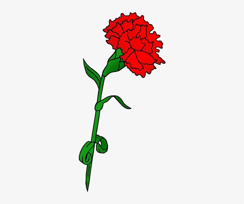 Red Carnation.