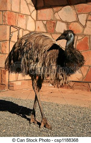 Pictures of Emu Bird.