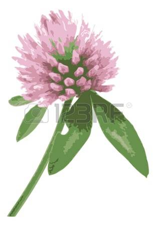 2,210 Red Clover Stock Illustrations, Cliparts And Royalty Free.