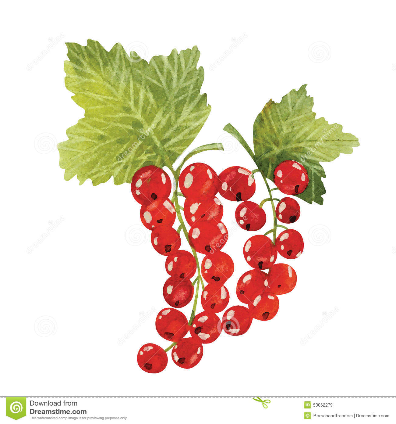 Red Currant Stock Vector.