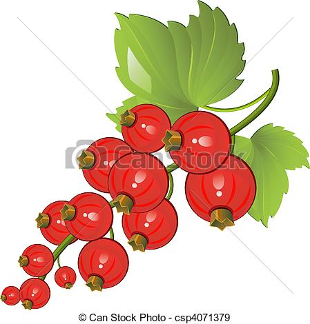 Redcurrant Clip Art and Stock Illustrations. 193 Redcurrant EPS.