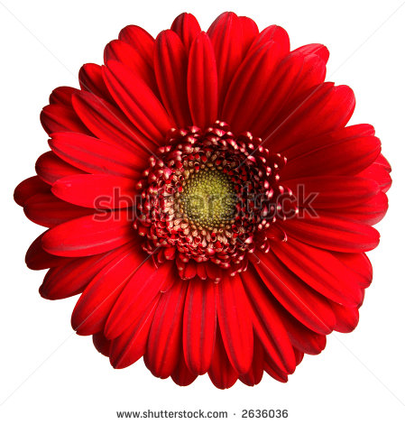 Red Daisy Clipart.