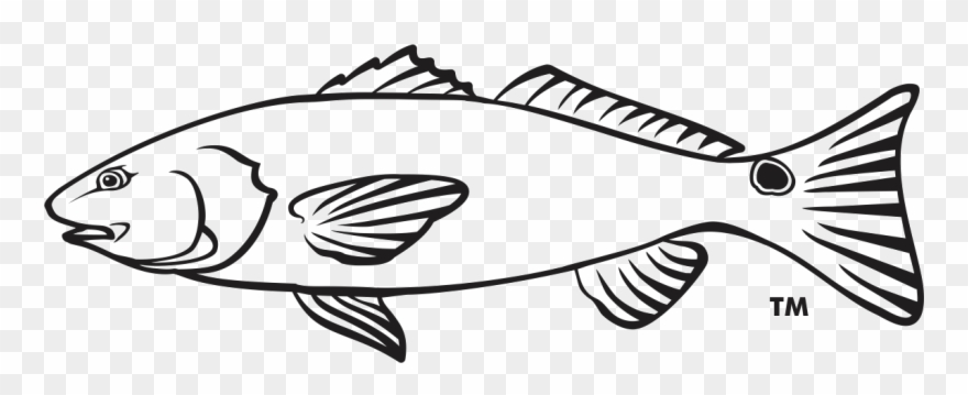 Seafood Drawing Outline.