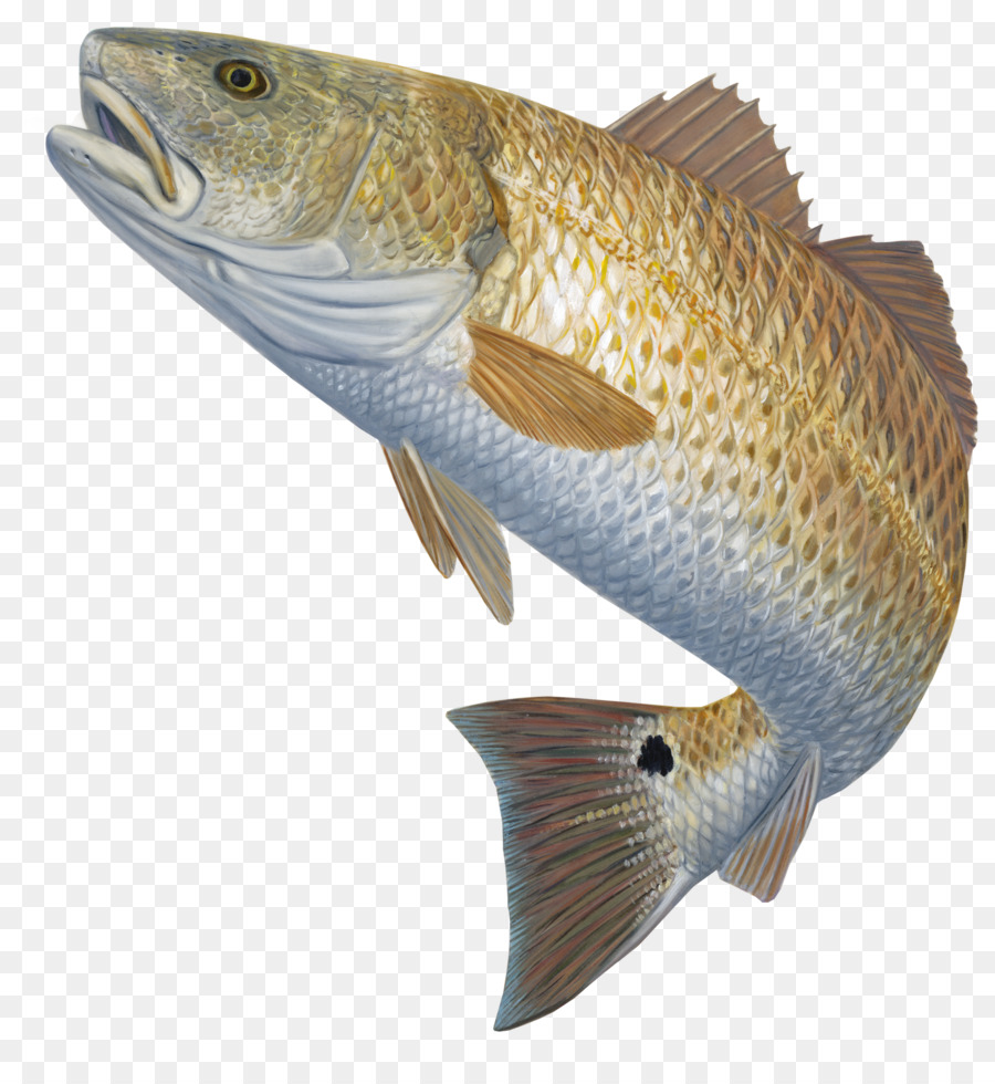 Fishing Cartoon clipart.