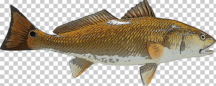Perch Redfish Red Drum Fishing PNG, Clipart, Animal Figure.