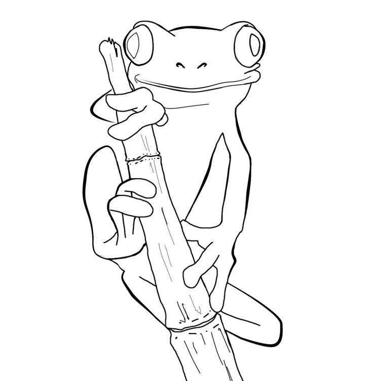 Red Eyed Tree Frog Coloring Pages.